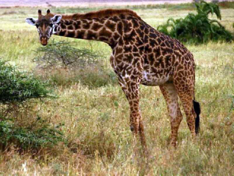 fotografia 70 de animais selvagens